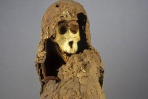 古埃及人养狒狒当宠物牙石研讨透露了它们的日子