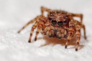 胸口长蜘蛛痣慢慢变小怎么回事蜘蛛痣的具体事项